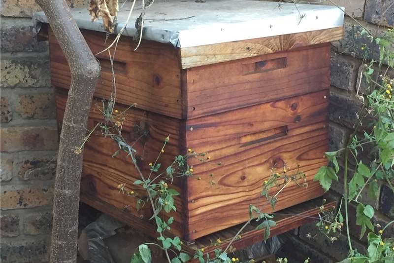 Beekeeping Beehives Byekorf