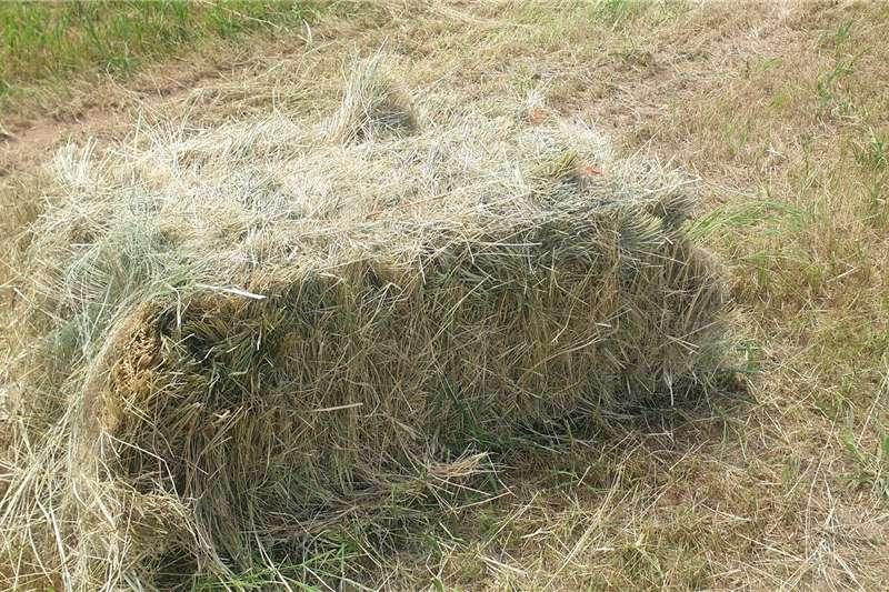 Combine harvesters and harvesting equipment Other heads Square Oulandsgras / Eragrostis