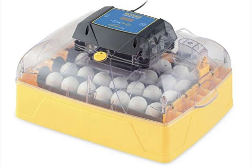 Broeimasjien Egg incubator