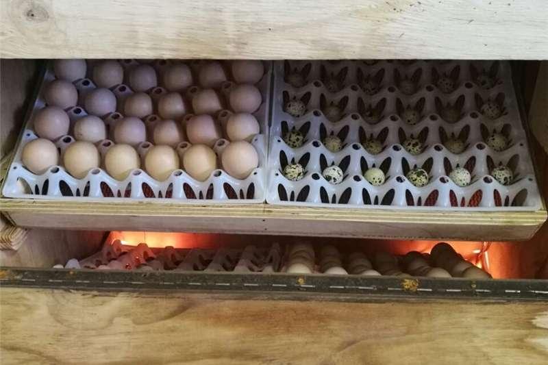 Egg incubator incubators