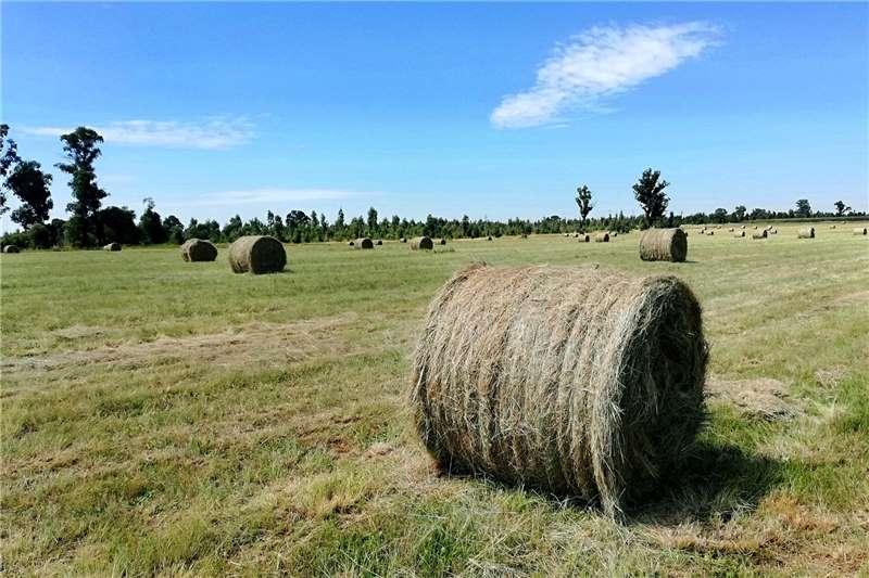 Horse feed 1.2m Eragrostis grass bale for sale Equestrian
