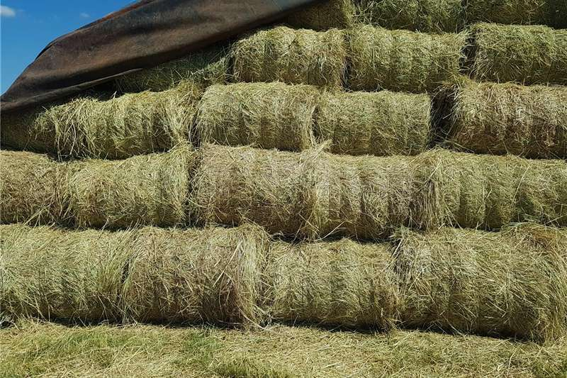 Hay and forage Balers Grass bales