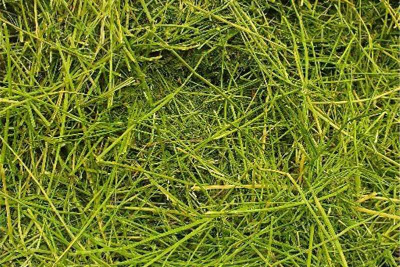 Hay and forage Other hay and forage LUCERNE A GRADE