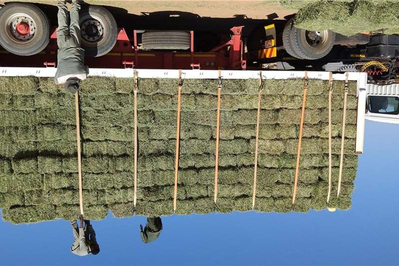 Hay and forage Other hay and forage LUCERNE BALES   LUSERN BALE