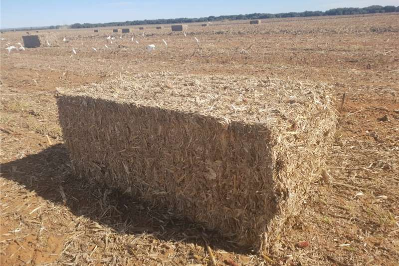 Hay and forage Other hay and forage Mieliereste te koop