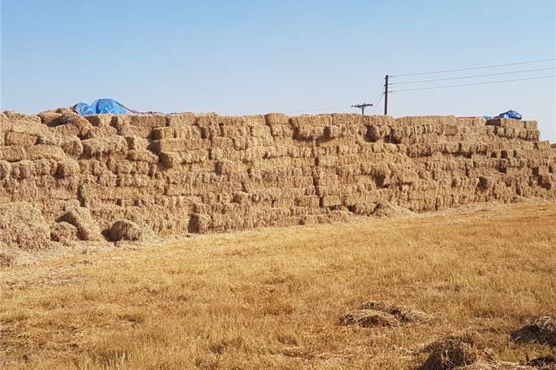 Hay and forage Other hay and forage Soy hay bales for sale