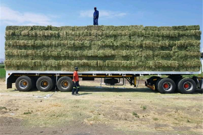 Haymaking and silage A grade Lucerne Hay Bales for sale Retail and whol