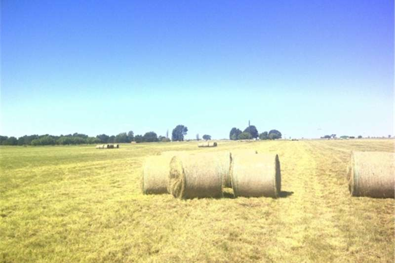 Haymaking and silage Groen Oulandsgras