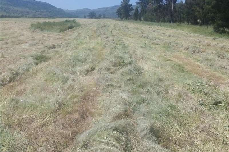 Haymaking and silage Round balers Teff Bales for sale 2000