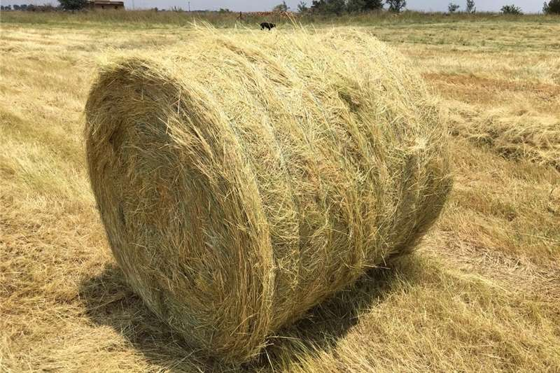 Haymaking and silage Teff Bales 2020