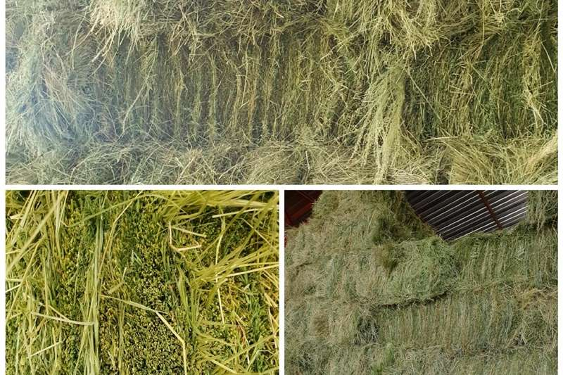 Haymaking and silage Teff bales