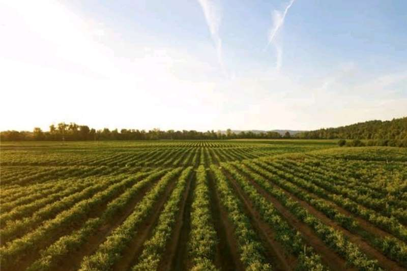Plants Farming opportunities wanted Gauteng, North West a Horticulture & crop management
