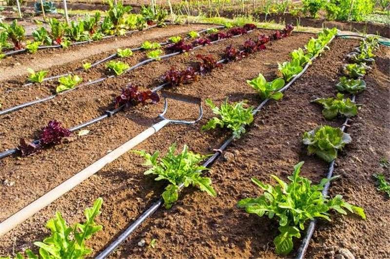 Irrigation pumps Drip irrigation and pumps for sale Irrigation