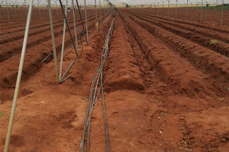 Pipes and fittings 2ND HAND IRRIGATION DRIP LINES Irrigation