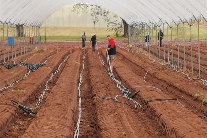 Pipes and fittings IRRIGATION DRIP LINES Irrigation