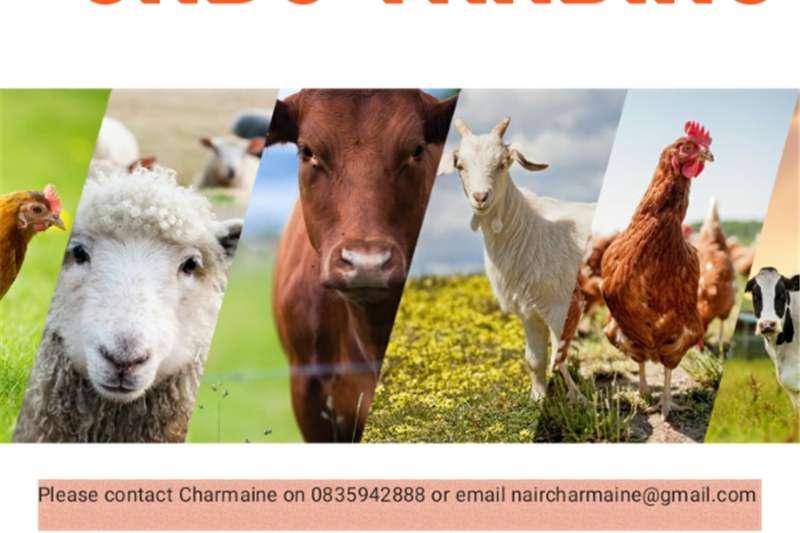 Livestock Cattle Cattle