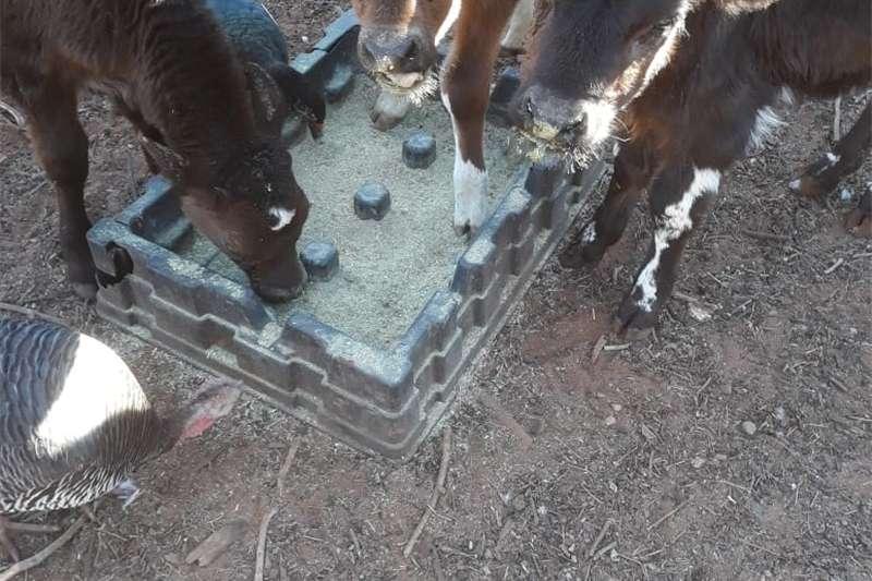 Livestock Cattle Kallers
