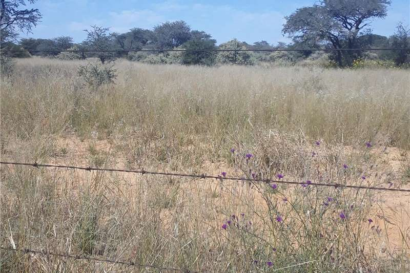 Cattle Weiding te huur Vryburg Molopo Area Livestock