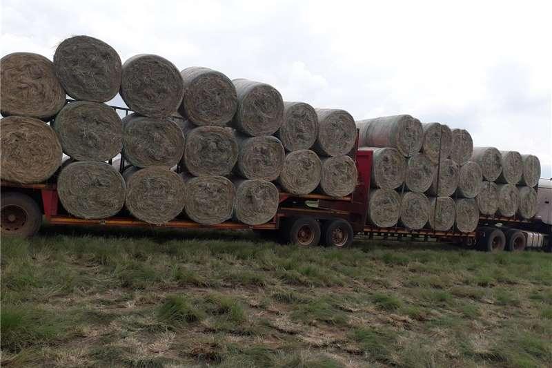 Livestock Feeding systems Eragrostis