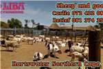 Goats Goats for sale on auction sheep on auction too Livestock