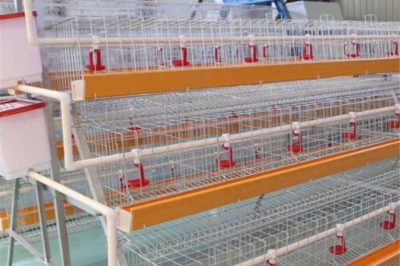 Livestock scale equipment LAYER CAGES Livestock handling equipment