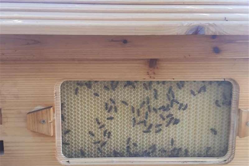 Livestock Horses Beehives – harvest your own honey