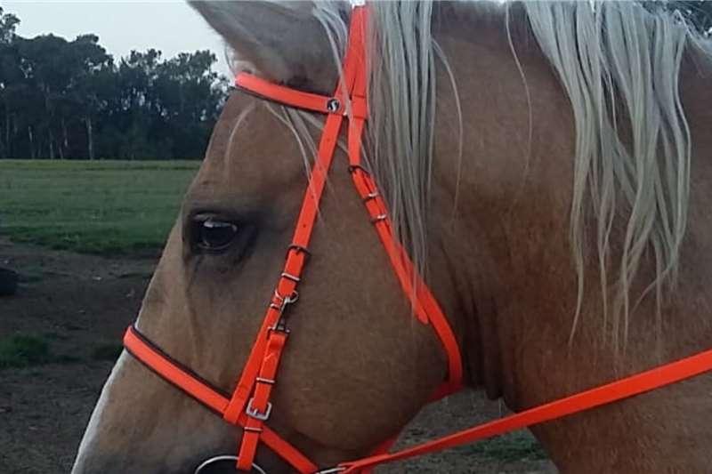 Livestock Horses