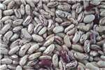 Livestock feed 100% Quality Peanuts, Soybeans, Sugar  Beans and M Livestock