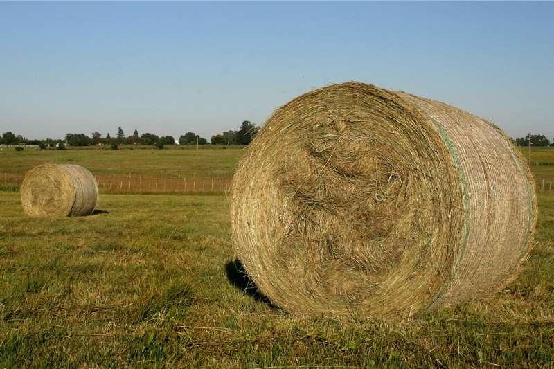 Livestock Livestock Feed !.2 M Eragrostis bales For sale