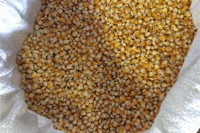 Livestock feed 50kg Yellow Dried Corn Livestock