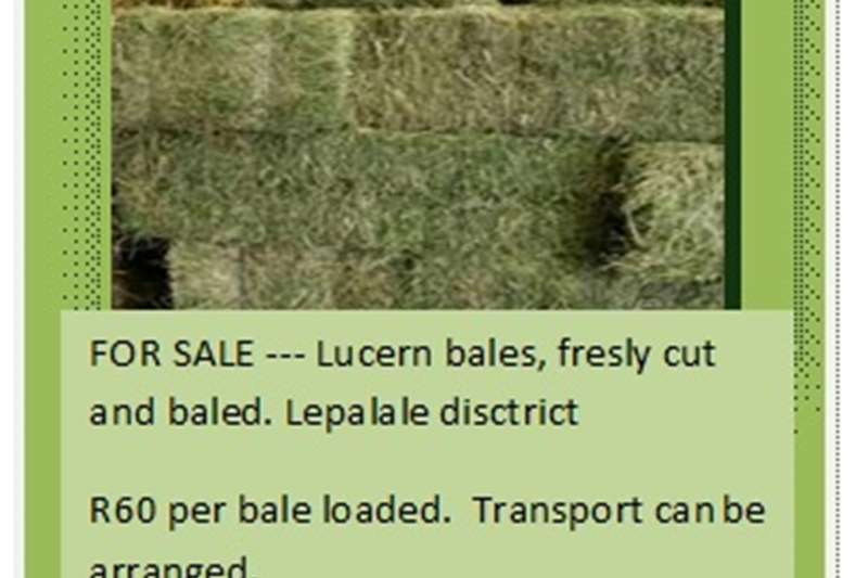 Livestock feed 6000 Lucerne Bales for sale Livestock