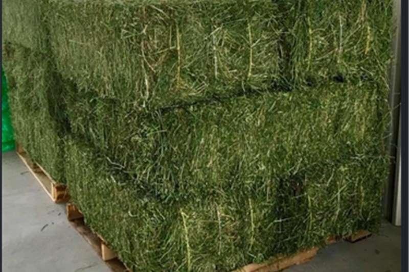 Livestock Livestock feed Alfalfa Hay for sale, quality Alfalfa Hay for anim