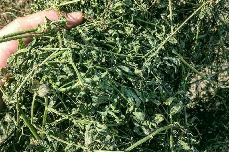 Livestock Livestock Feed Alfalfa Hay