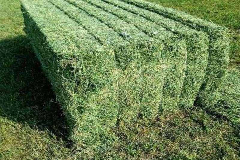 Livestock feed Alfalfa Hay, Oaten Hay, Rhodes Hay, Wheat Hay, Tim Livestock