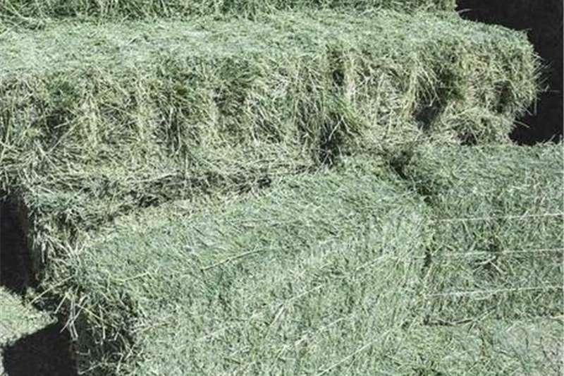 Livestock feed Alfalfa Livestock