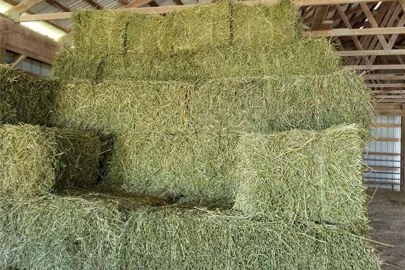 Livestock Livestock feed Animal Feed,Poultry Feed