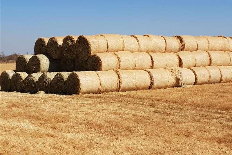Livestock feed Arries Gras Bale Te Koop Livestock
