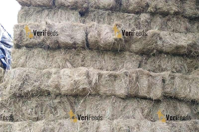 Livestock feed Bales for sale   Lucerne, Eragrostis, Teff Livestock