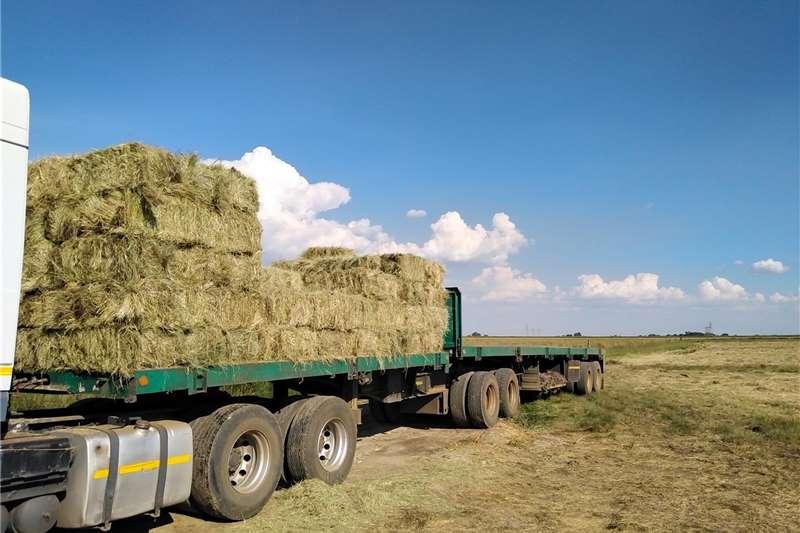 Livestock feed Bales   Lucerne, Teff, Eragrostis   Nationwide del Livestock