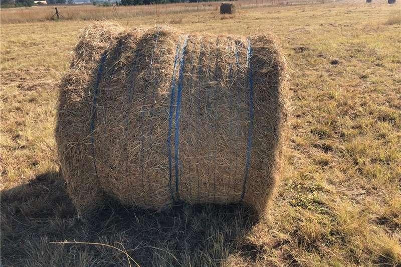 Livestock feed Big Eregrostis Bales Livestock