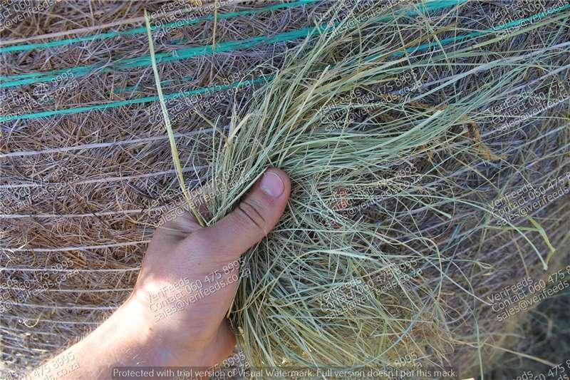 Livestock feed Eragrostis (Oulands gras) bale te koop Livestock