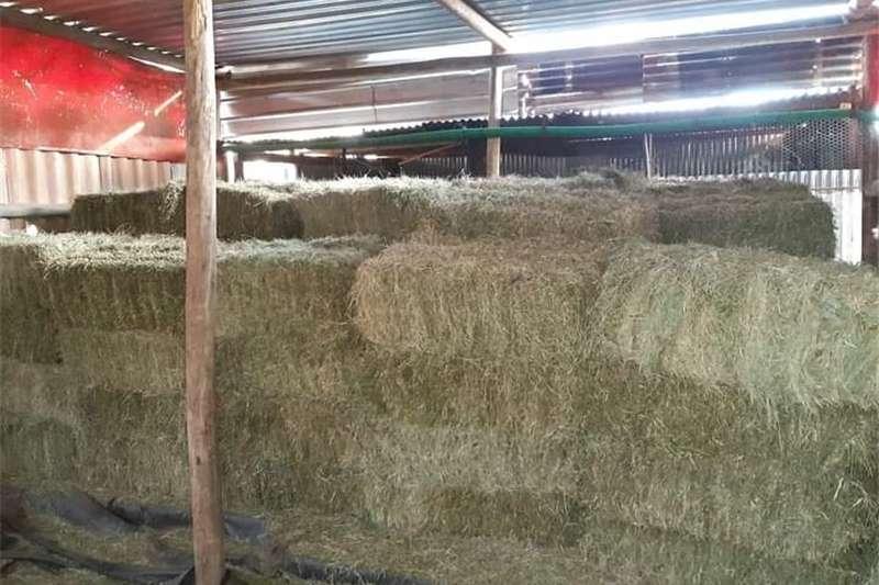 Livestock feed Fresh A grade lusern bales for sale Livestock