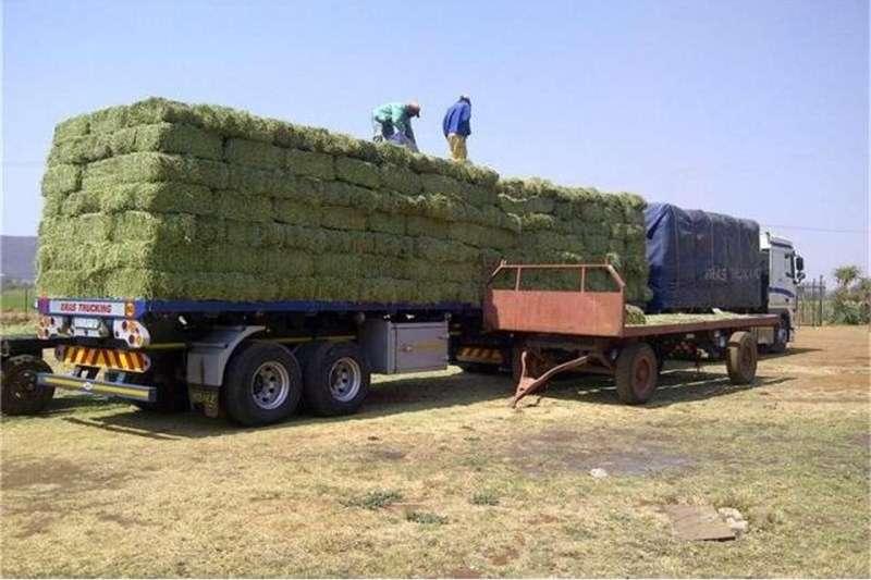 Livestock Livestock feed Fresh Grade A Lucerne bales/Alfafa Hay for Animal
