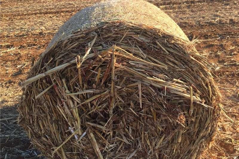 Livestock Livestock feed Graan Sorghum bale te koop.