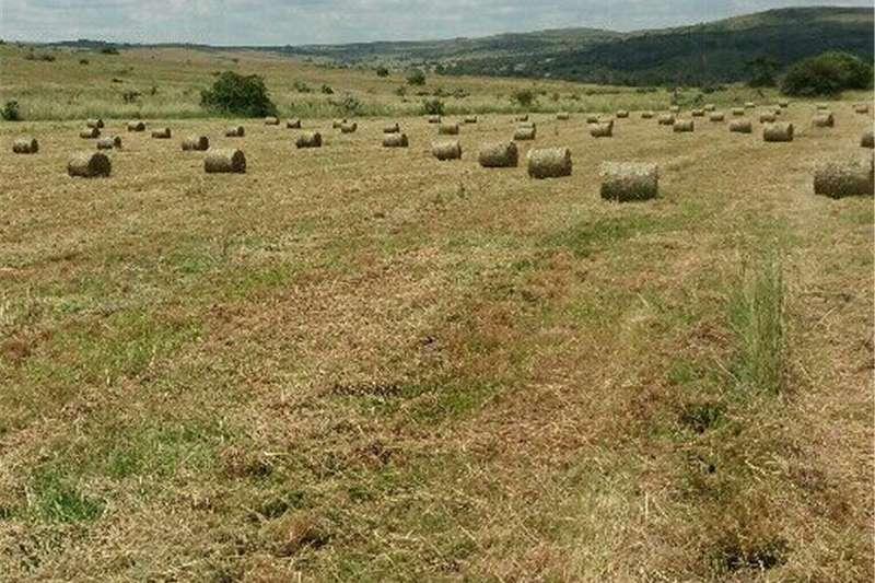 Livestock Livestock feed gras baale
