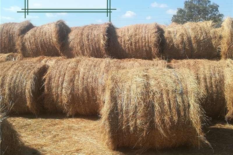 Livestock Livestock feed Gras bale te koop