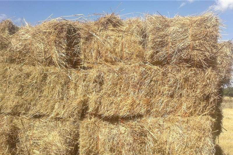 Livestock Livestock feed Grasbale te Koop