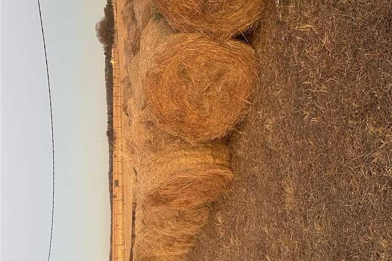 Livestock feed Grass Bales (Eragrostis) Livestock