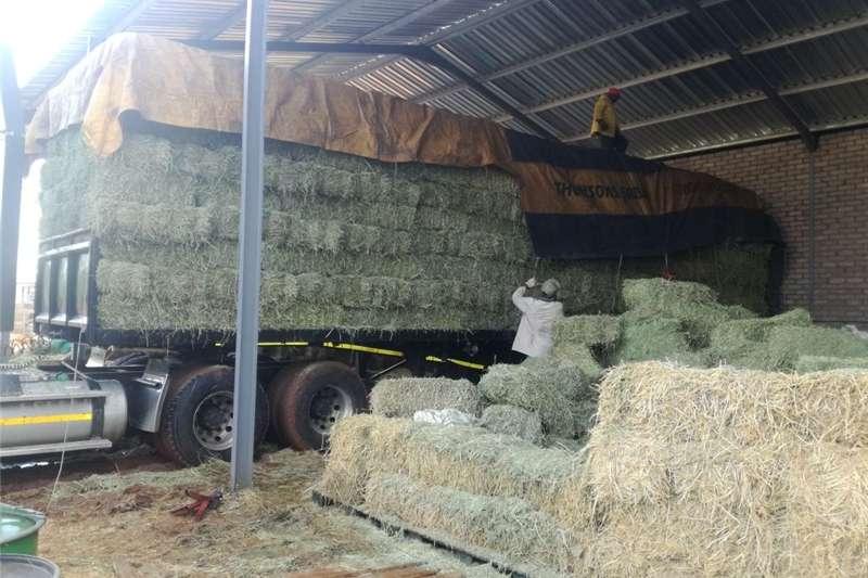 Livestock Livestock feed Hartswater Lusern Big packs