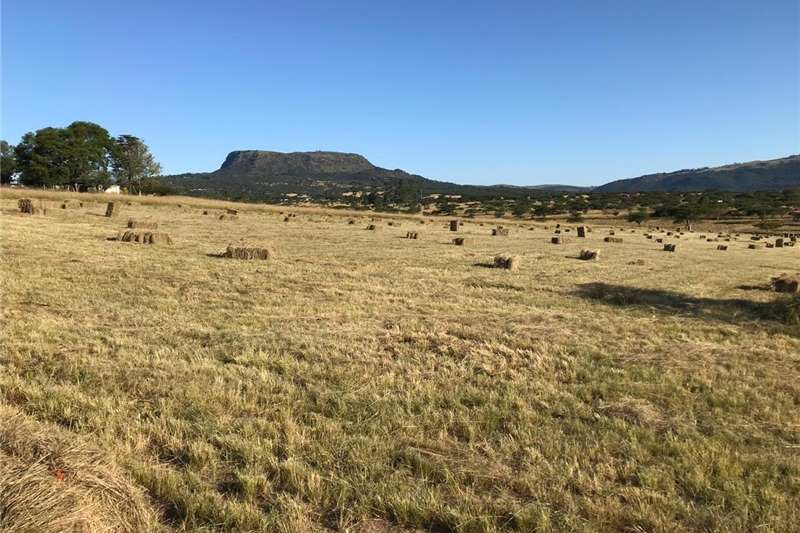 Livestock Livestock feed Hay Bales For Sale